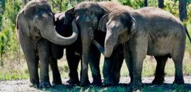 Elefantes de circo son recibidos en su nuevo hogar, un santuario en Florida