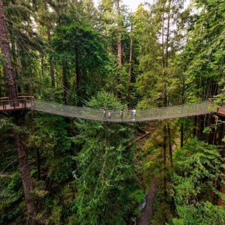 Camina a 30 metros de altura entre los árboles gigantes de California en esta nueva ruta elevada