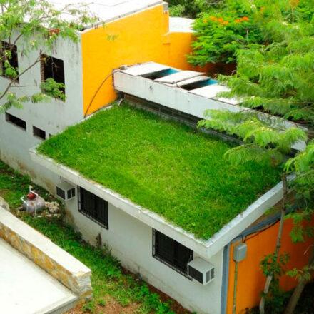 Mexicanos crean techos verdes que reducen 17° la temperatura de los hogares