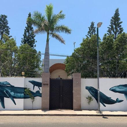 ¡Mural de ballenas! La joven artista visual que empieza a hacer historia con su arte