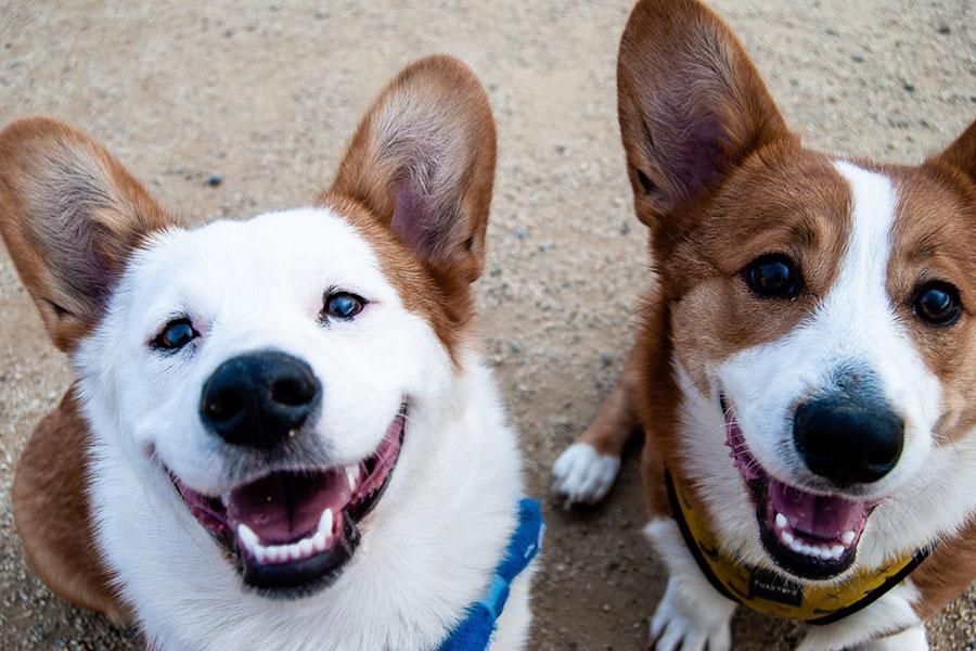 Los animales también ríen, sugiere nuevo estudio