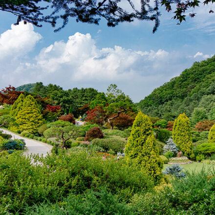 Corea del Sur plantará 3 mil millones de árboles para alcanzar la neutralidad de carbono en 2050