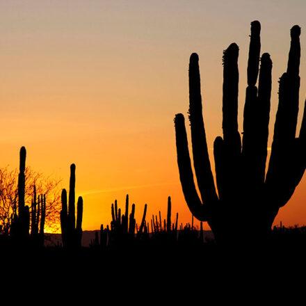 Energía solar: el futuro de Sonora
