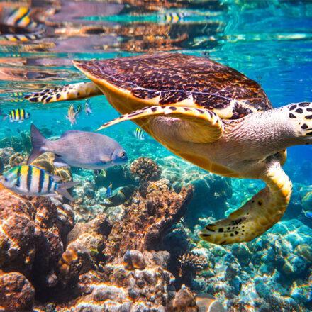 ¡A proteger los océanos! 10 especies marinas amenazadas en México