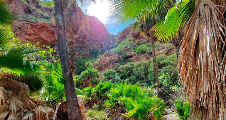 Cañón del Nacapule, un oasis de biodiversidad en Sonora
