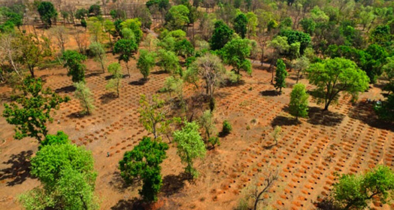 Voluntarios en India plantan 250 millones de árboles en un solo día y logran tasa de supervivencia del 80%