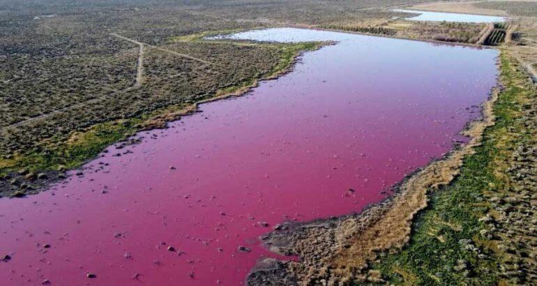 Laguna en Argentina se vuelve rosa… pero no sucedió de manera natural