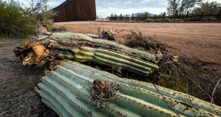 Pide Unesco a EEUU remediar daños ocasionados en el Desierto de Sonora por la construcción del muro fronterizo
