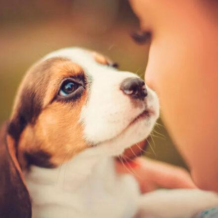 El cuento mixe que explica cómo los perros nos protegen de espíritus malignos