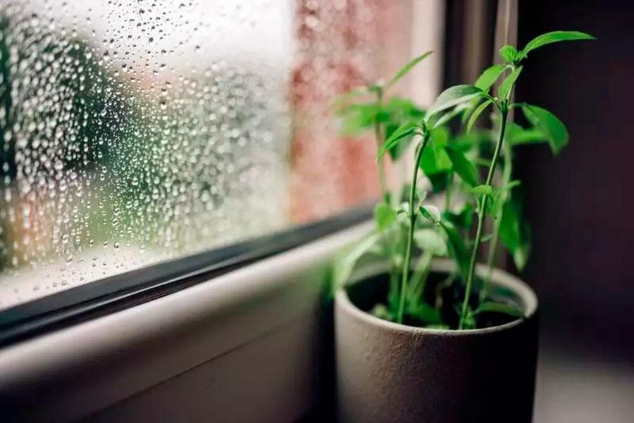 5 beneficios de regar tus plantas con agua de lluvia