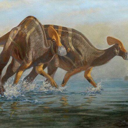 Tlatolophus galorum, la especie inédita de dinosaurio que fue descubierta recientemente en Coahuila