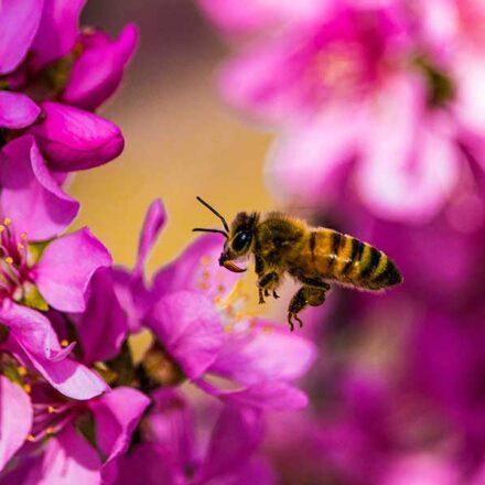 Científicos crean innovador sistema de simulación para salvar a las abejas