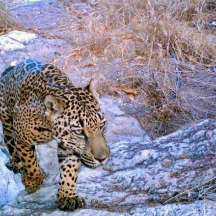 5 animales que quizás no sabías que viven en Sonora