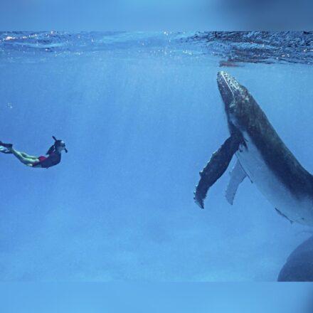 Video muestra el encuentro de una pareja con un grupo de ballenas jorobados