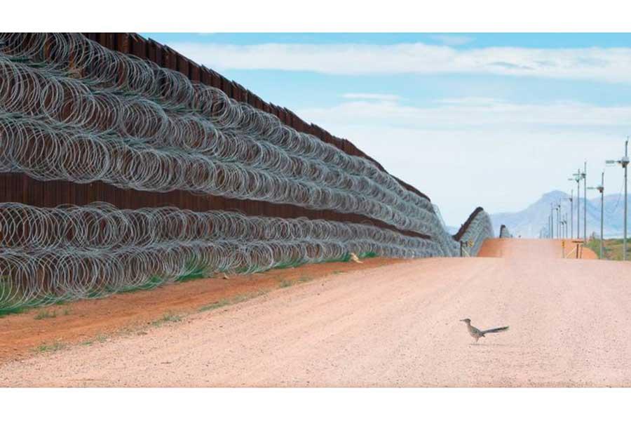 Con imagen de un correcaminos frente al muro fronterizo, mexicano gana prestigiado concurso internacional