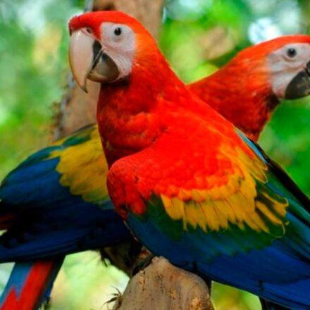 Día Mundial de los Animales: 7 especies amenazadas en México