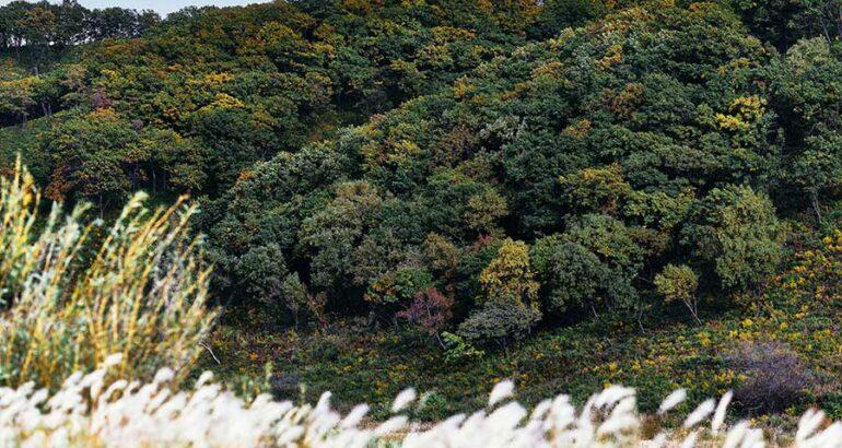 Árboles aumentan su tasa de fotosíntesis en respuesta al CO2 en la Tierra, revela estudio